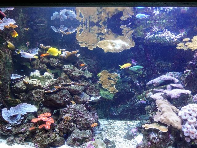 サンゴ礁 1_edit