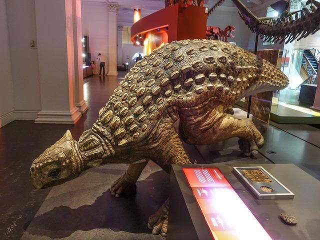 アンキロサウルス 1_edit