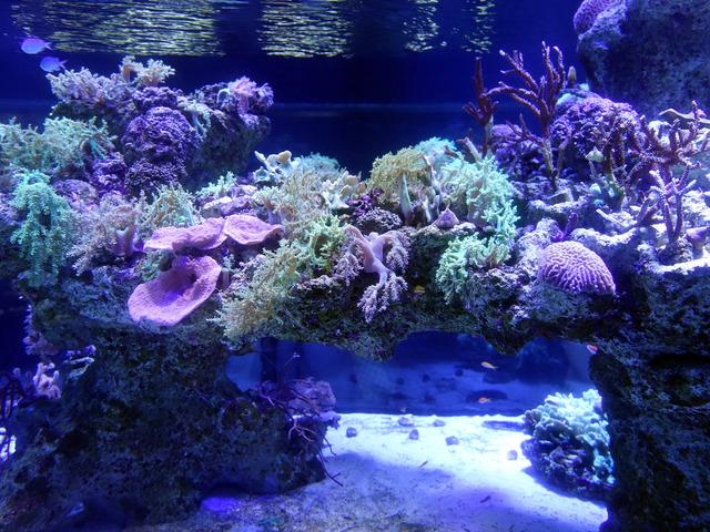 サンゴの群生 3_edit
