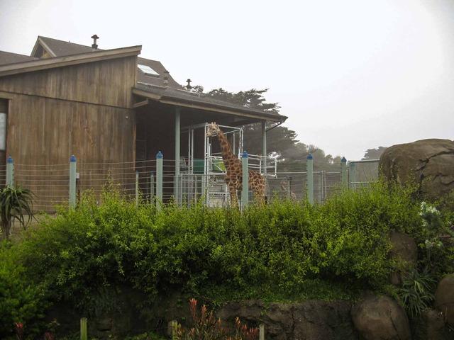 Giraffe 1_edit