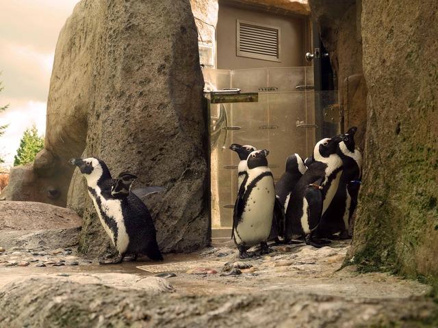 アフリカン・ペンギン 8_edit