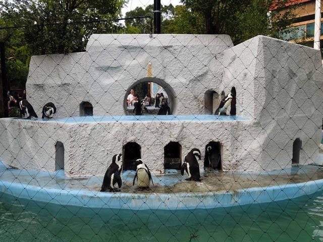 ペンギン 6_edit