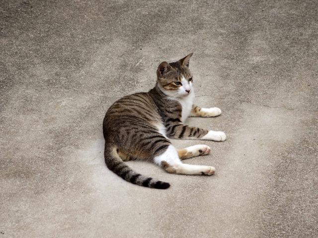 呼子の猫 4_edit