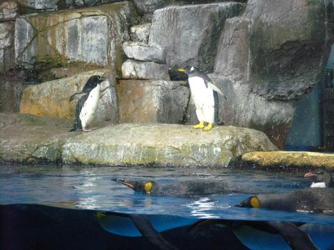 ペンギン 3