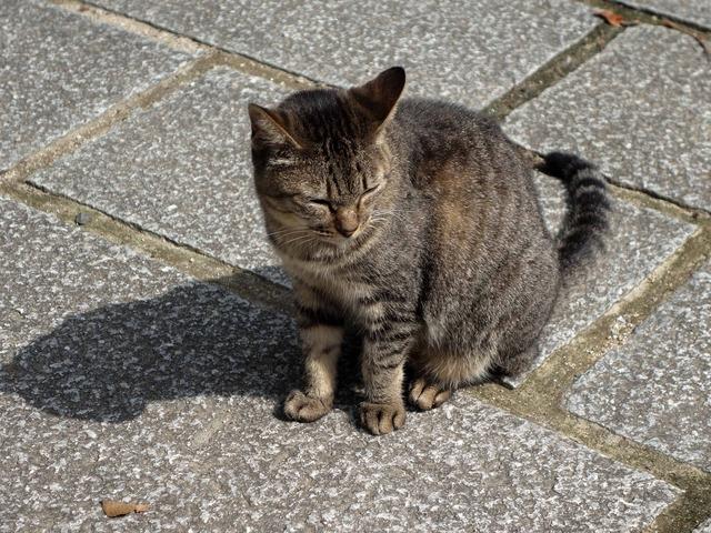 お城周辺の猫 7_edit