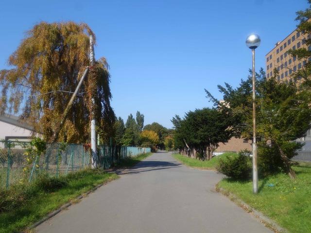 農学部本館西側の小路 2_edit