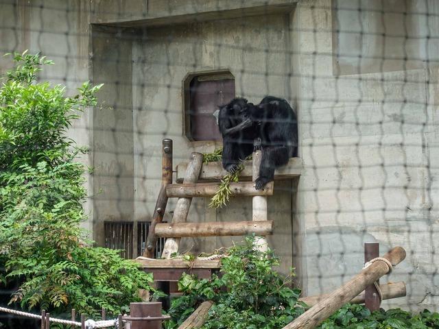 チンパンジー_edit