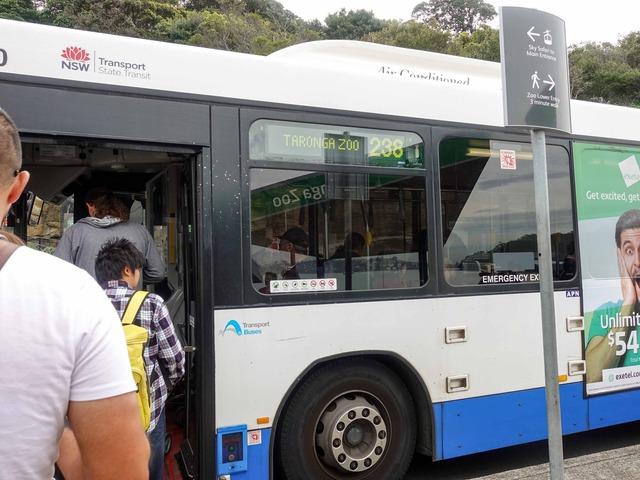 タロンガ動物園行きのバス 1_edit