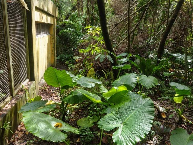 アジア熱帯雨林区 6_edit