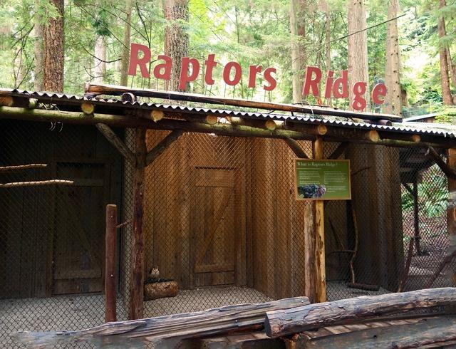 Raptors Ridge 2_edit