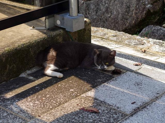 お城周辺の猫 4_edit