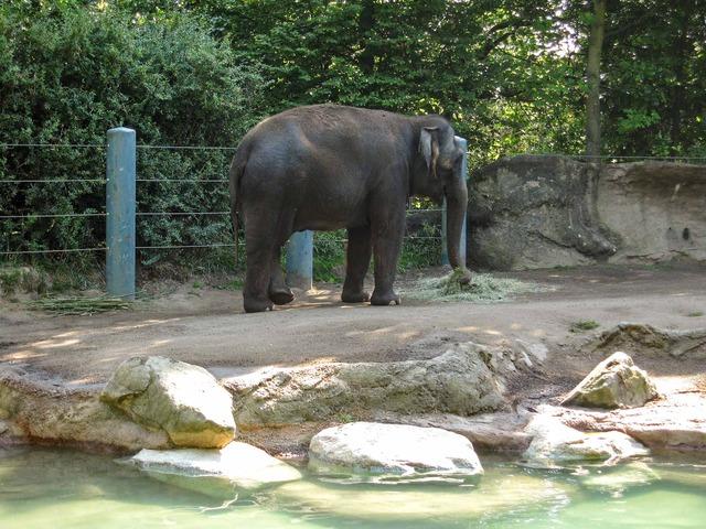 Elephant 3_edit