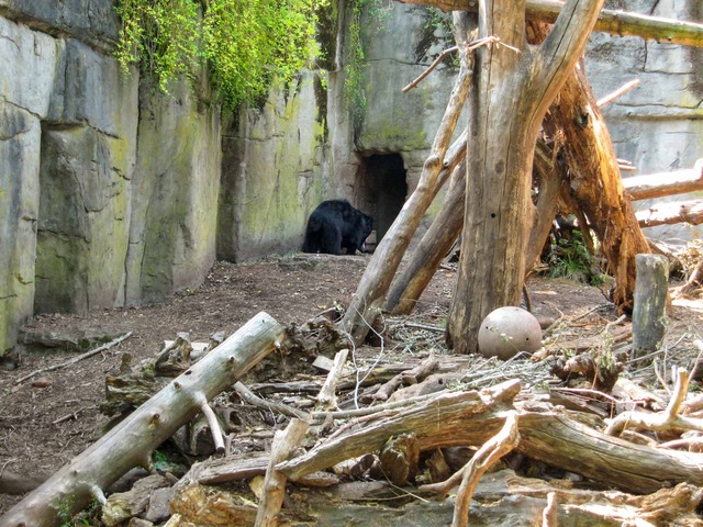 Asian Bear 1_edit
