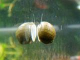 その後の石巻貝2