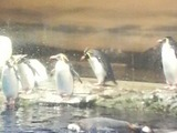 ペンギン�rs-