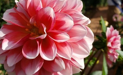 きれいな花・・・って柄ではないですが( ノД`)シクシク…