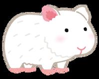 animal_marmot_white