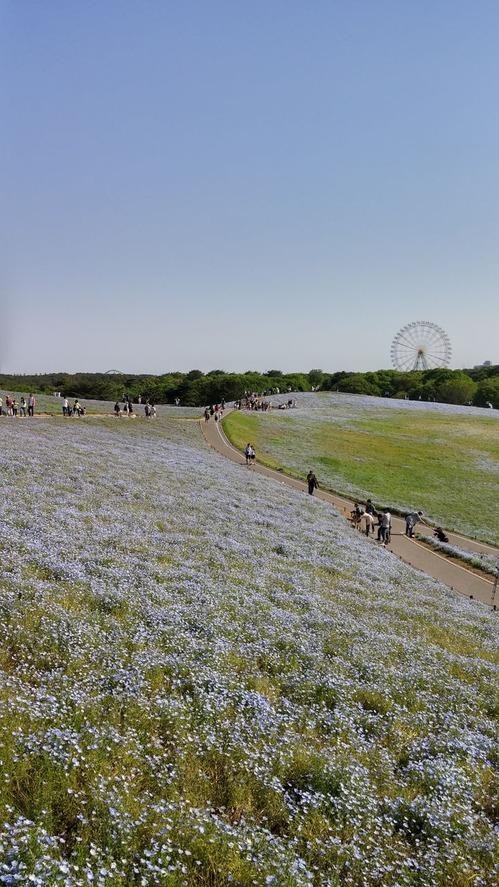 20160505_ひたち海浜公園_HDR