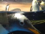 ペンギン4rs-