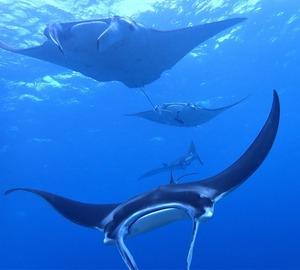 クジラの声を聴きながらマンタ三昧💗