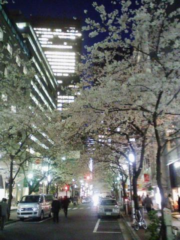 20110406yozakura2.jpg