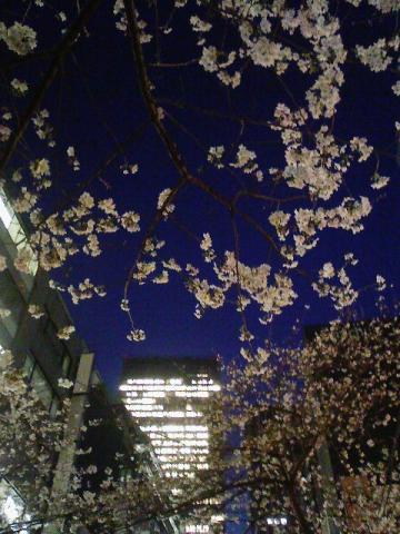 20110406yozakura1.jpg