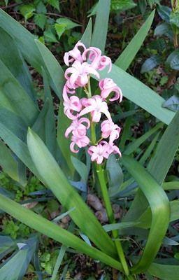 b1704庭の花達5
