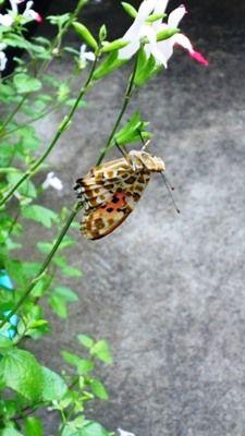 b170601今年も蝶が7時2分