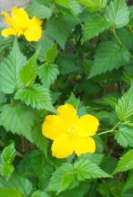 b1704庭の花達8