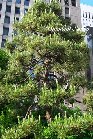 pinetree001