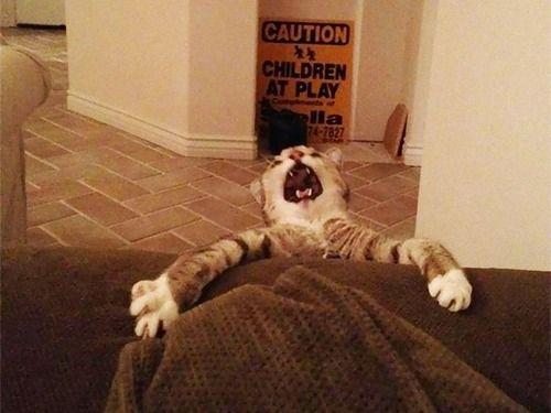 ドラマチックな猫たち…アカデミー賞を授けたくなる写真いろいろ