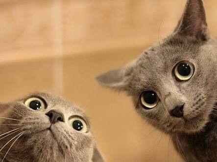 ネッコ「お、人間が食べかけの弁当捨てとるやんけ!貰ったろ!」