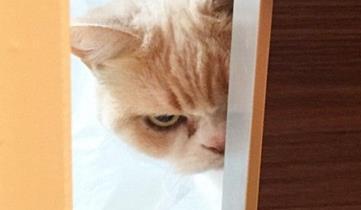 目つきの鋭いネコが話題に、「ダークサイドに堕ちたな」「人間に疲れたんだ…」「二コール・キッドマンに似てる」