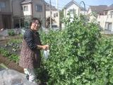 25,4,29昭和の日、やまちゃん農園 002