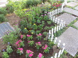 平成24年6月26日花の植え替え 006
