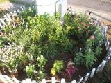 平成24年6月26日花の植え替え 008