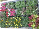 平成24年6月26日花の植え替え 005
