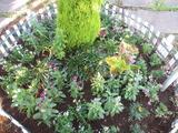平成24年6月26日花の植え替え 009