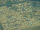 下の川にはまるであの日が無かったような清流で魚たちが泳ぐ