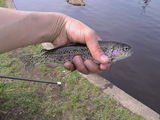 釣った虹鱒、こちらも150円です。
