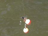 ROBOT Fishing rally 2006実験大会の様子3 お祭りにはイエローカード1枚が与えられるイエローカード2枚でブルーギル一匹分の釣果が、3枚でブラックバスの釣果が失われる