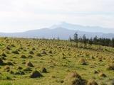 牧草地から雪を頂く岩手山を望む