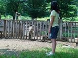 一匹の太った羊の首が柵から抜けなくなってしまった