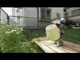 レトロの水遣り