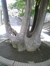 鷹取登山口の西友にあった不思議な木