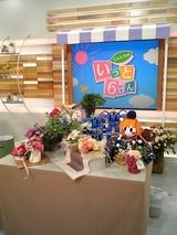 母の日のフラワーアレンジメント、生花に埋まるダイナマとトコトコ