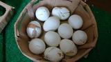 練習に使用したゆで卵は1ダースくらい。全て食べました。