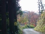 参道は紅葉が綺麗だった