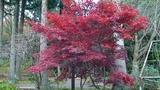 紅葉が綺麗2