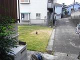 タヌキ来訪事件はユウタが10月29日の10時ころ庭で発見した事により始まる。